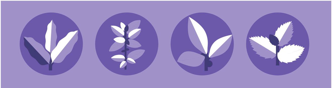 Iconos de 4 aceites esenciales